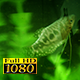 Aquarium And Fish 3 - VideoHive Item for Sale