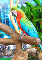 macaw parrots - PhotoDune Item for Sale