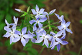 Phlox flowers - PhotoDune Item for Sale