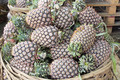 Pineapples Piled in Basket - PhotoDune Item for Sale