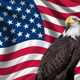 USA Flag with bald eagle - PhotoDune Item for Sale