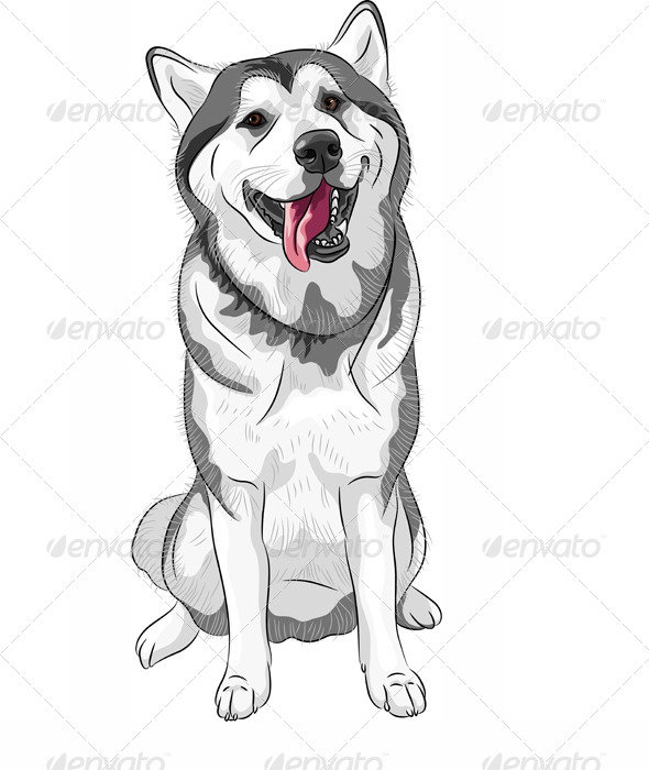 Siberian Husky Dog - Animals Characters