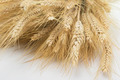Studio Close Up Wheat Stalks - PhotoDune Item for Sale