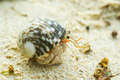 Hermit crab - PhotoDune Item for Sale