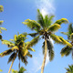 palms under blue sky - PhotoDune Item for Sale