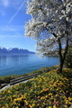 Springtime at Geneva lake, Montreux, Switzerland - PhotoDune Item for Sale