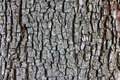 Tree bark texture detail close up - PhotoDune Item for Sale