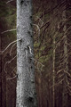 Tree trunk in spooky forest - PhotoDune Item for Sale