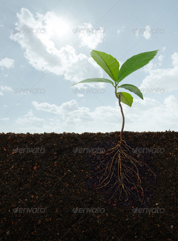 plant with roots - Stock Photo - Images