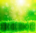 Green nature background with fresh grass and water - PhotoDune Item for Sale