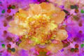 Colorful Floral Abstract - PhotoDune Item for Sale