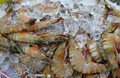 fresh prawns on ice in asian market, Thailand - PhotoDune Item for Sale