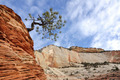 Pine Tree on top of a Sandstone Formation in Zion - PhotoDune Item for Sale