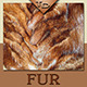 Fur Textures - GraphicRiver Item for Sale
