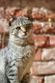 cat over wall background - PhotoDune Item for Sale