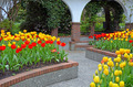 Colorful tulip courtyard - PhotoDune Item for Sale
