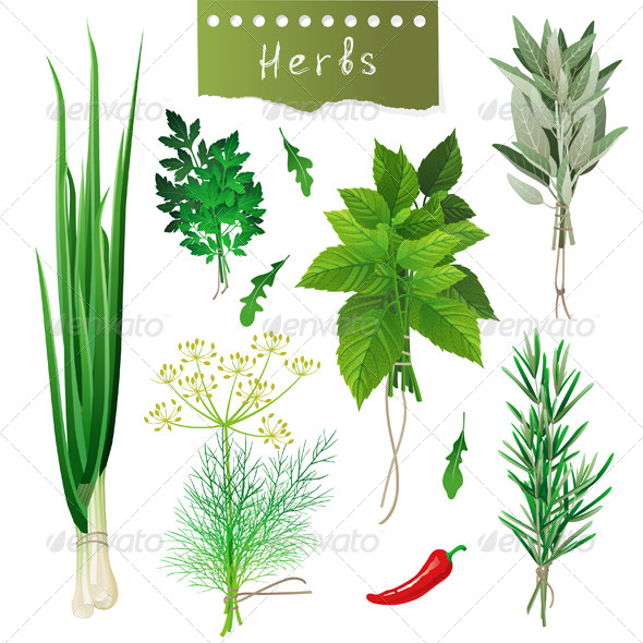 GraphicRiver Herbal Bunches 4599583