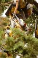 Fruit Bat Stare - PhotoDune Item for Sale