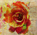 Rose Textured Abstract - PhotoDune Item for Sale