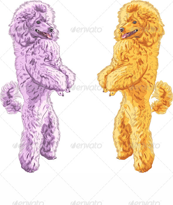 Vector Dogs Poodle Breed Standing on his Hind Legs - Animals Characters