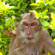 Hua Hin Monkey 10 - PhotoDune Item for Sale