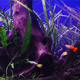 Aquarium - VideoHive Item for Sale