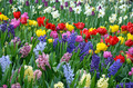 Beautiful spring garden - PhotoDune Item for Sale