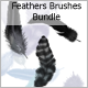 Feathers Brushes Bundle - GraphicRiver Item for Sale