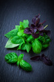Variation of basil - PhotoDune Item for Sale