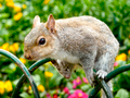 Squirrel Holding onto Garden Railings - PhotoDune Item for Sale