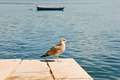 seagull - PhotoDune Item for Sale