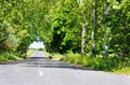 Row of trees in road at Portugal - PhotoDune Item for Sale