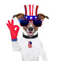 usa american dog - PhotoDune Item for Sale