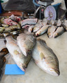 Variety of fresh fish in market - PhotoDune Item for Sale