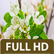 Pear Flower Blossoming - VideoHive Item for Sale