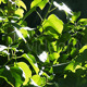 Green Leaves - VideoHive Item for Sale