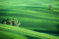 Hilly landscape of Tuscany - PhotoDune Item for Sale