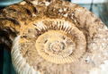 fossil shell - PhotoDune Item for Sale