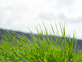 natural green grass with selective focus - PhotoDune Item for Sale