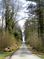 Road in the forest - PhotoDune Item for Sale
