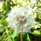 seed head - PhotoDune Item for Sale