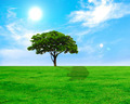 Lonely tree on green grass field and blue sky - PhotoDune Item for Sale
