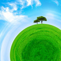 Part of a spherical panorama of a green meadow with tree - PhotoDune Item for Sale