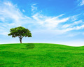 Green tree on green grass and cloudy sky - PhotoDune Item for Sale