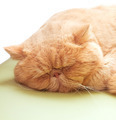Sleepy cat lying on warm machine unwilling to open its eyes - PhotoDune Item for Sale