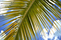 Palm branch against blue sky - PhotoDune Item for Sale