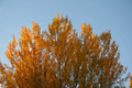 Autumn Tree - PhotoDune Item for Sale