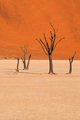 Dead trees in Dead Vlei, Namibia - PhotoDune Item for Sale