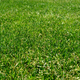Grass Background - PhotoDune Item for Sale
