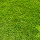 Wrong icon on green grass texture and background - PhotoDune Item for Sale